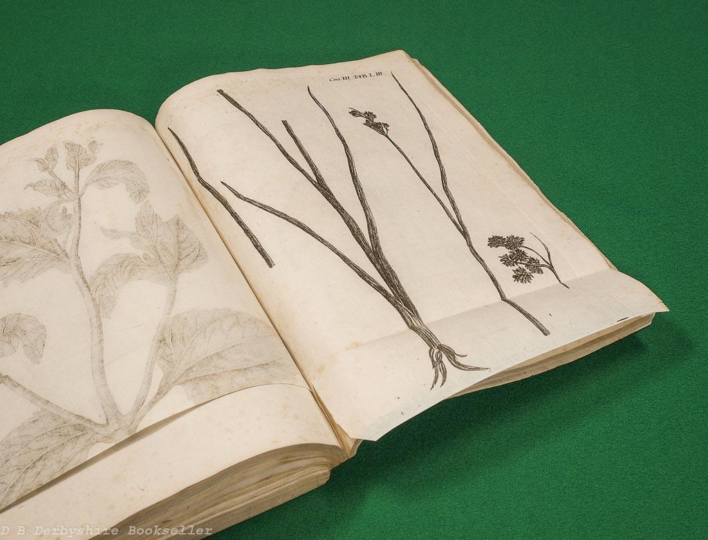 Plantarum minus cognitarum centuria III complectens plants circa Byzantium & in Oriente observatas | J. C. Buxbaum | 1729